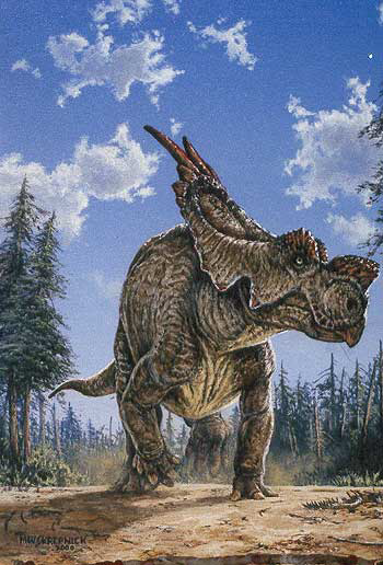 Размер: Длина до 7 м Высота до 2 м Вес до 4 т Питание:растения Обитал в Канаде.  Описание:Мирный динозавр с