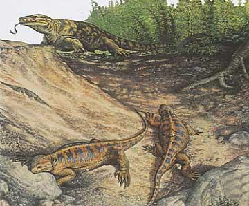 http://lesdinos.free.fr/casea%20varanosaurus.jpg