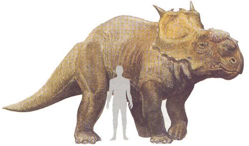 KINGDOM Animalia  Pachyrhinosaurus Vs Albertosaurus